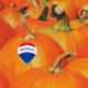 remax pumpking picking